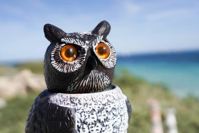 Why Do Beach Houses Have Owls?